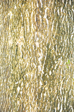 bark background: The Close Up Pattern Of Tree Bark Texture For Background