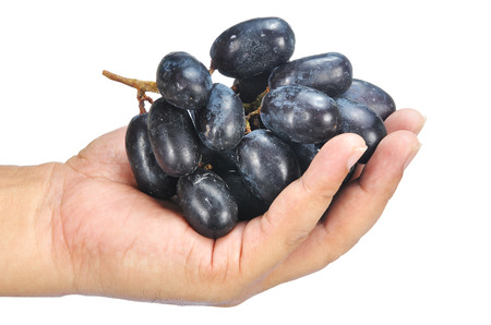 seedless: hand holding delicious and fresh black seedless grape isolated on white. Stock Photo