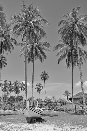 wooden boat: The coconut trees and wooden boat in black and white