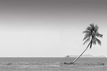 south space: The coconut tree in black and white at the beach of south china sea with copy space area