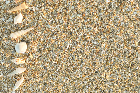 Inspirational motivating quote on sand with seashell at the beach.