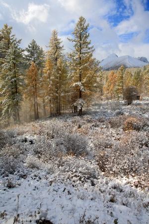 the altai mountains: The Altai Mountains