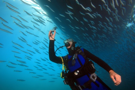 Diving in the Red Sea photo