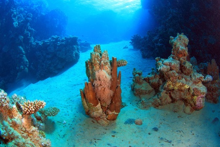 Diving in the Red Sea Standard-Bild