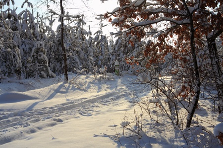 Winter forest Stock Photo - 12812722