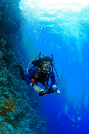 Marine Life in the Red Sea
