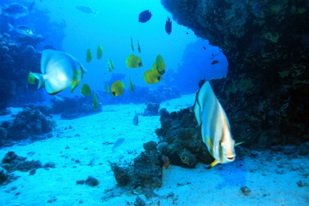 Marine Life in the Red Sea photo