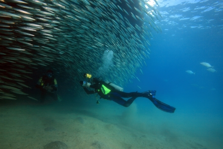 Diving in the Red Sea Stock Photo