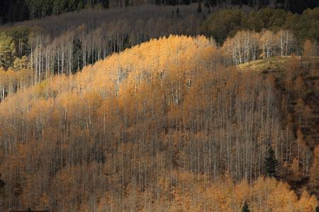 indian summer in colorado photo