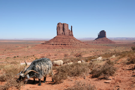 rock wool: Sheep grazing in Monument Valley Stock Photo