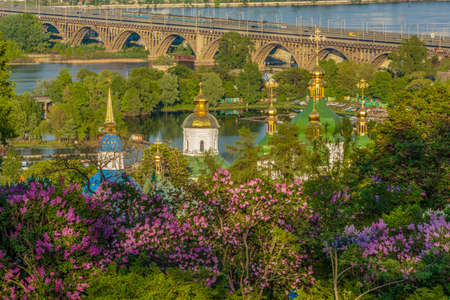 Blooming lilacs in the botanical garden, Kiev, Ukraine