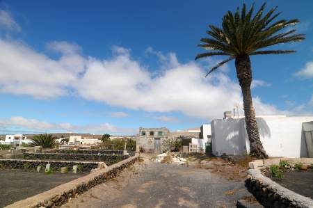 Road and a Palm on a cloudy sky ,in Lanzarote, Spain photo