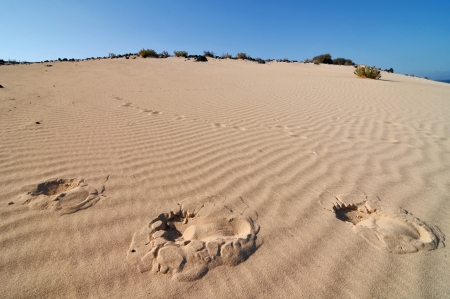 Footsteps in the desert , in Canary Islands, Spain photo