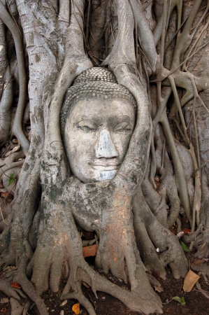 buddha statue tree covered in roots in thailand photo