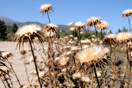 Some Dried Flowers with Thorns in the Desert photo