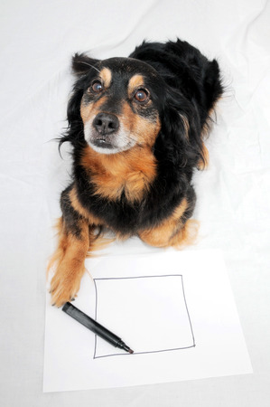 dog pen: One Female Old Black Dog Drawing on a White Paper Stock Photo