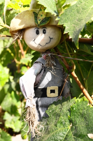 One Small Funny Scarecrow on a Green Vineyard photo