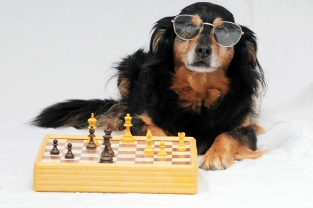 Een Smart Black Dog Playing Chess