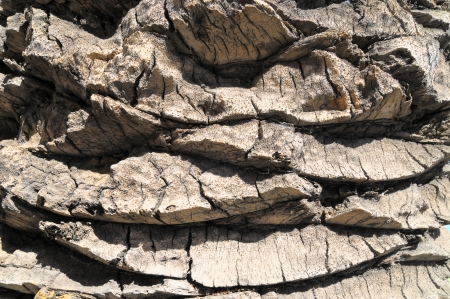 Close up of the Bark of a Textured  Palm Tree photo