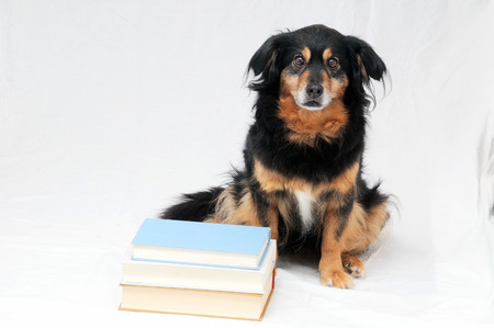 apt: One intelligent Black Dog Reading a Book on a White Background