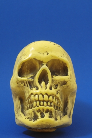 An Ancient Yellow Skull  on a Colored Background Stock Photo - 23679077