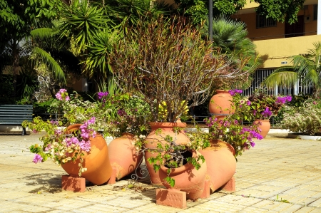 Vintage Terracotta Flower Pots with Plants on the Floor photo