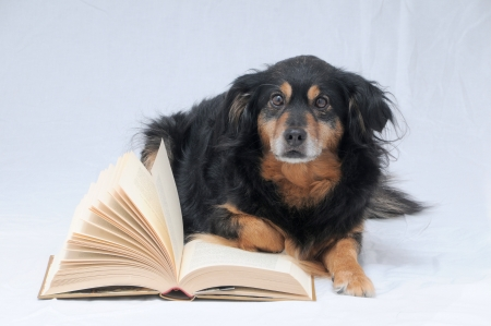 One intelligent Black Dog Reading a Book on White Background photo