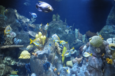 Underwater Fishes in a Blue Tropical Acquarium Stock Photo - 25104827