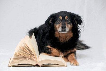 One intelligent Black Dog Reading Book on a White Background photo