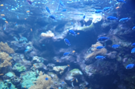 Underwater Fishes in a Blue Tropical Acquarium Stock Photo - 25258789