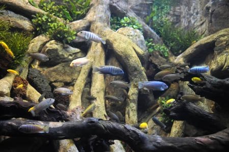 Underwater Fishes in a Blue Tropical Acquarium Stock Photo - 25258802