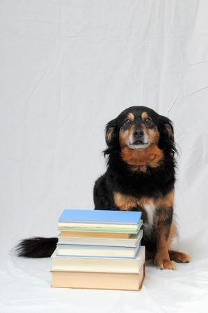 One intelligent Black Dog Reading a Book on White Background photo