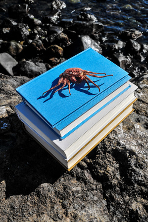 Orange Crab and Blue Books on the Volcanic Rocks photo