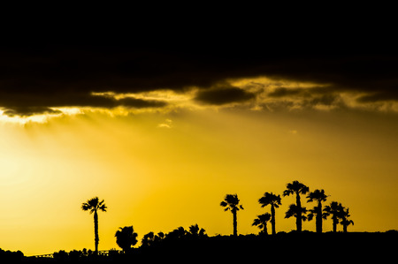 Silhouette of a palm tree at sunset in countryside photo