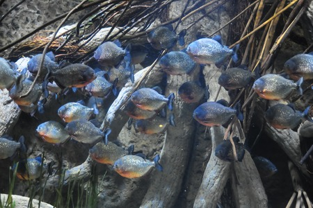 Underwater Fishes in a Blue Tropical Acquarium photo