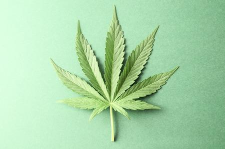 Green Fresh Marijuana Leaf with Seven Tips
