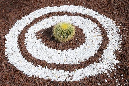 Round Succulent Plant Cactus over White Sand Circles photo