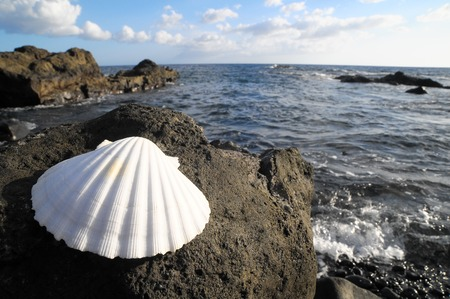 One Limestone Sea Shell Near the Atlantic Ocean photo
