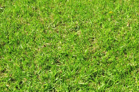 Fresh Green Grass Leaf Texture Pattern on a Sunny Day photo