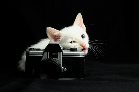 White Young Baby Cat on a Black Background photo