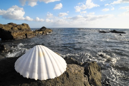 One Limestone Sea Shell Near the Atlantic Ocean photo