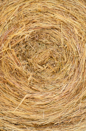 Image of Dried Yellow Hay Pattern Texture Background photo