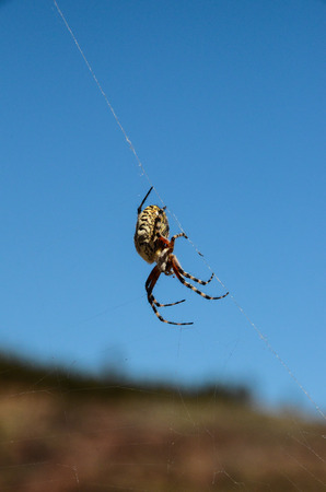 Big Insect Spider and Web into the Wild photo