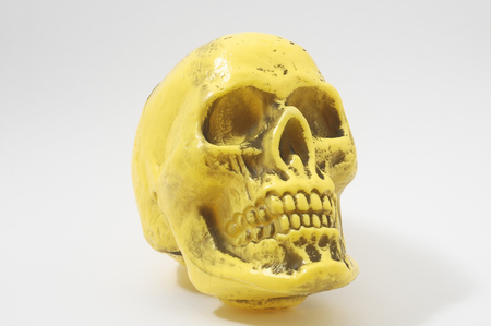 An Ancient Yellow Skull on a White Background photo