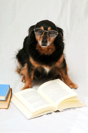 One intelligent Black Dog Reading a Book on a White Background photo