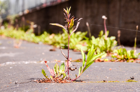 Green Plant Growing Trough Cracked Asphalt Floor photo