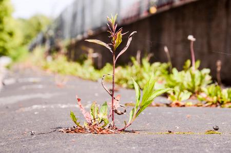 Green Plant Growing Trough Cracked Asphalt Floor photo