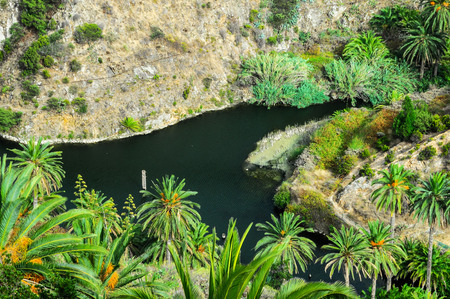 canarian: Tropical Canarian Green Palm and Black Water Lake