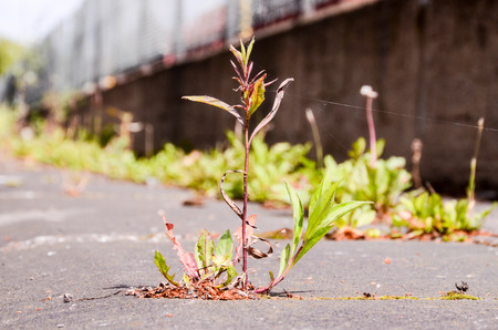 Green Plant Growing Trough Cracked Asphalt Floor