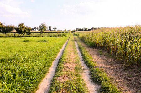Countryside Gravel Road Going Through the Fields in North Italy photo